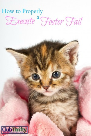 After my neighbor found a kitten under their shed, we agreed to foster it. Guess what happened next. Here's how you can execute a foster fail of your own!