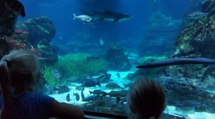 Barcelona aquarium - Barcelona Pass review